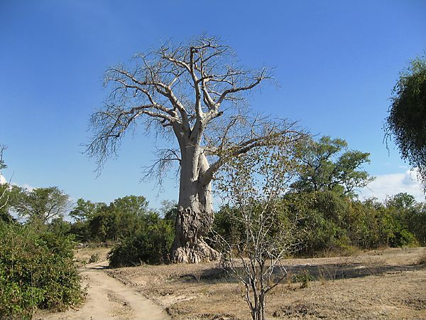 Bushland In South Luangwa National Park, Zambia