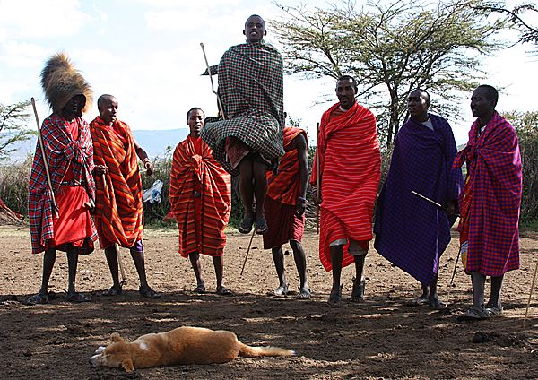 Maasai warrior doing the jump dance