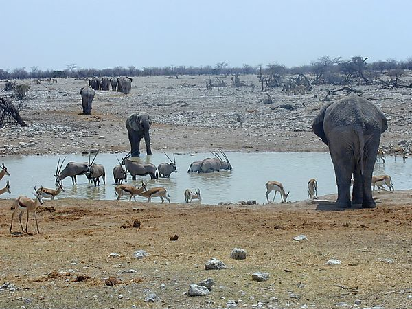 Wildlife At Waterhole In Etosha National Park, Namibia