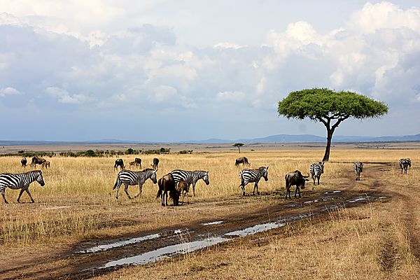 Wildlife in Masai Mara