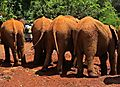 Elephants at Sheldrick Elephant Orphanage