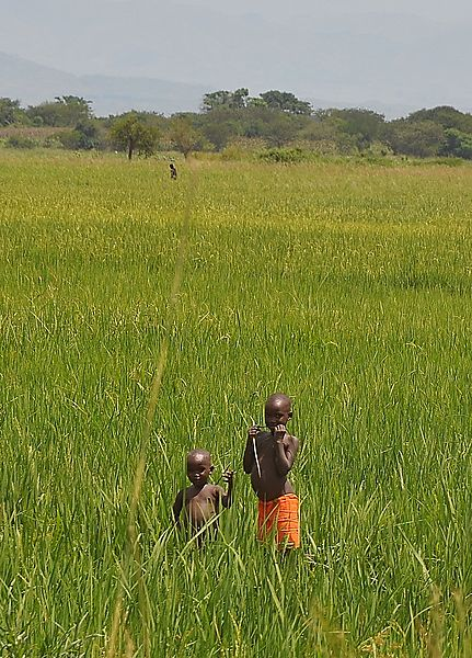 children in the fields
