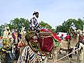 Sallah Celebration In Katsina, Nigeria.