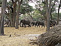 Elephants moving to evening water at Sable Sands Camp.