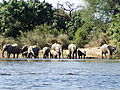 Family Outing On The Zambezi