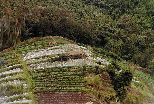 Terrace cultivation