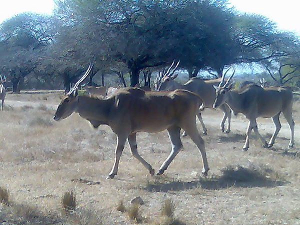 Nguni Nature Sanctuary