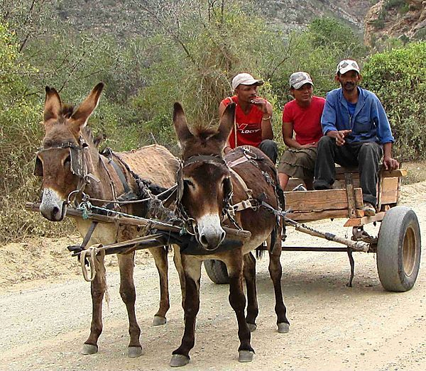 Transport By Donkey Cart