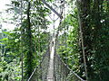 Rope Bridge In Kakum National Park