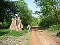Termite Hill