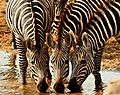 Tarangire National Park Tanzania