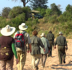 Safari Guiding
