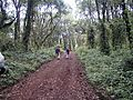 Hiking Through Rainforest,  Machame Route, Kilimanjaro, Tanzania