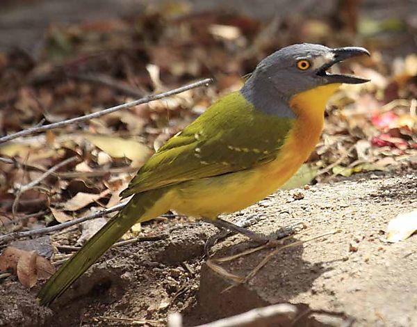 Photographs Of African Bird Species