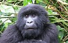 46 Day Gorillas, East & Southern Africa adventure