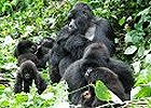 46 Day South Africa, East Africa & Gorilla Safari