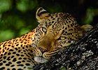 Family Safari in Malaria Free Big 5 Reserve