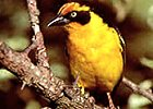 7 Days: Bird-watchers Paradise Safari Kenya