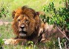 3 Days: Cats cradle - Masai Mara Kenya Safari