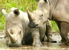 Kruger National Park - Family or Small Group safari