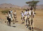 Eritrea Discovery