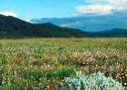 Kitulo National Park Mountain Hiking