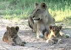 Small Group Kruger Safari