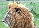 Seventh Natural Wonder of the World, Masai Mara Safari