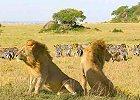 Masai Mara, Nakuru,Samburu, Mt. Kenya, Tsavo Safari