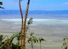 Tanzania's Ngorongoro Crater and Lake Manyara  Safari