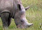 Luxury Safari Ngorongoro Crater & Lake Manyara