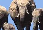 Kruger Park - Fly in Big 5 Safari