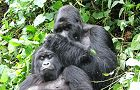 24 day Gorillas, Game Parks & Zanzibar