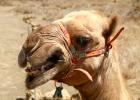 Samburu and Lake Turkana Camel Safari