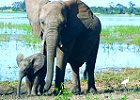 Best of Botswana, Fully Guided Mobile Safaris 2014