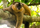 Volunteer on the Madagascar Conservation Research Programme