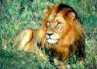 Tanzania Fly-in Lodge Safari to Serengeti Nat Park