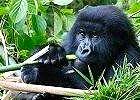 Wildlife & Gorilla Safari Uganda