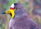 Birding Watching Tour Uganda