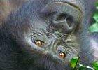 Budget Gorilla Safari in Uganda