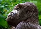 Rwanda Gorilla Budget Safari