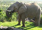 Cape Town - Kruger Park - Victoria Falls Luxury