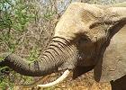 Kenya Maasai Mara Budget Safari 3 Days