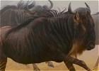 Magnificent Masai Mara Budget Safari - Kenya