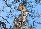 7 day Outstanding Kenya Lodge Safari