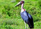 Hiking and Bird Watching Tour in Tanzania