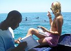 Dolphin Research in Kenya