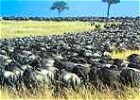 Short Wildebeest Migration Safari in Tanzania