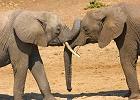 Tanzania Wildebeest Migration Lodge Safari  - 6 Days