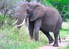 4 Days Masai Mara Safari